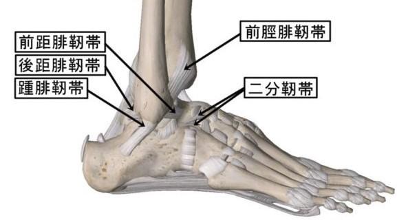 靭帯 断裂 足首